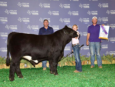 Winners American Classic Show Cattle Quality Show Cattle